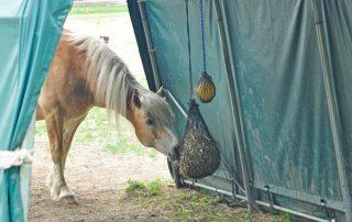 Pferd frisst Heu im trockenen Weidezelt