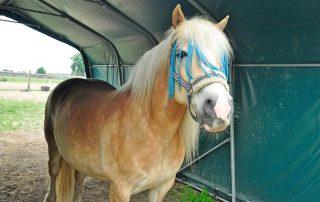Pferd überdacht im Weidezelt