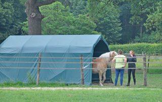 Pferd und Pferdehalter gemeinsam beim Weidezelt