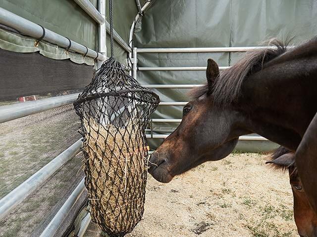 Pferd im Weidezelt