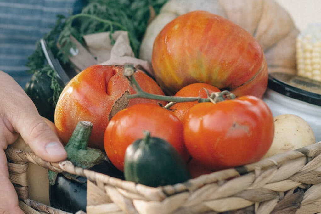 Schrebergarten - bauen Sie Ihr eigenes Obst und Gemüse an!